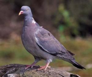 madárriasztás